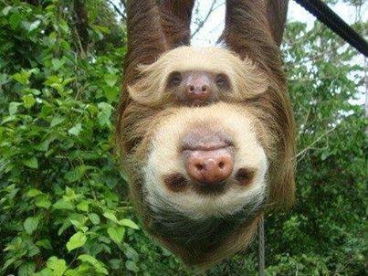 sloth-sonido-del-mar-pavones