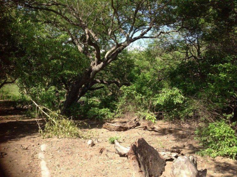 punta-mango-land-for-sale