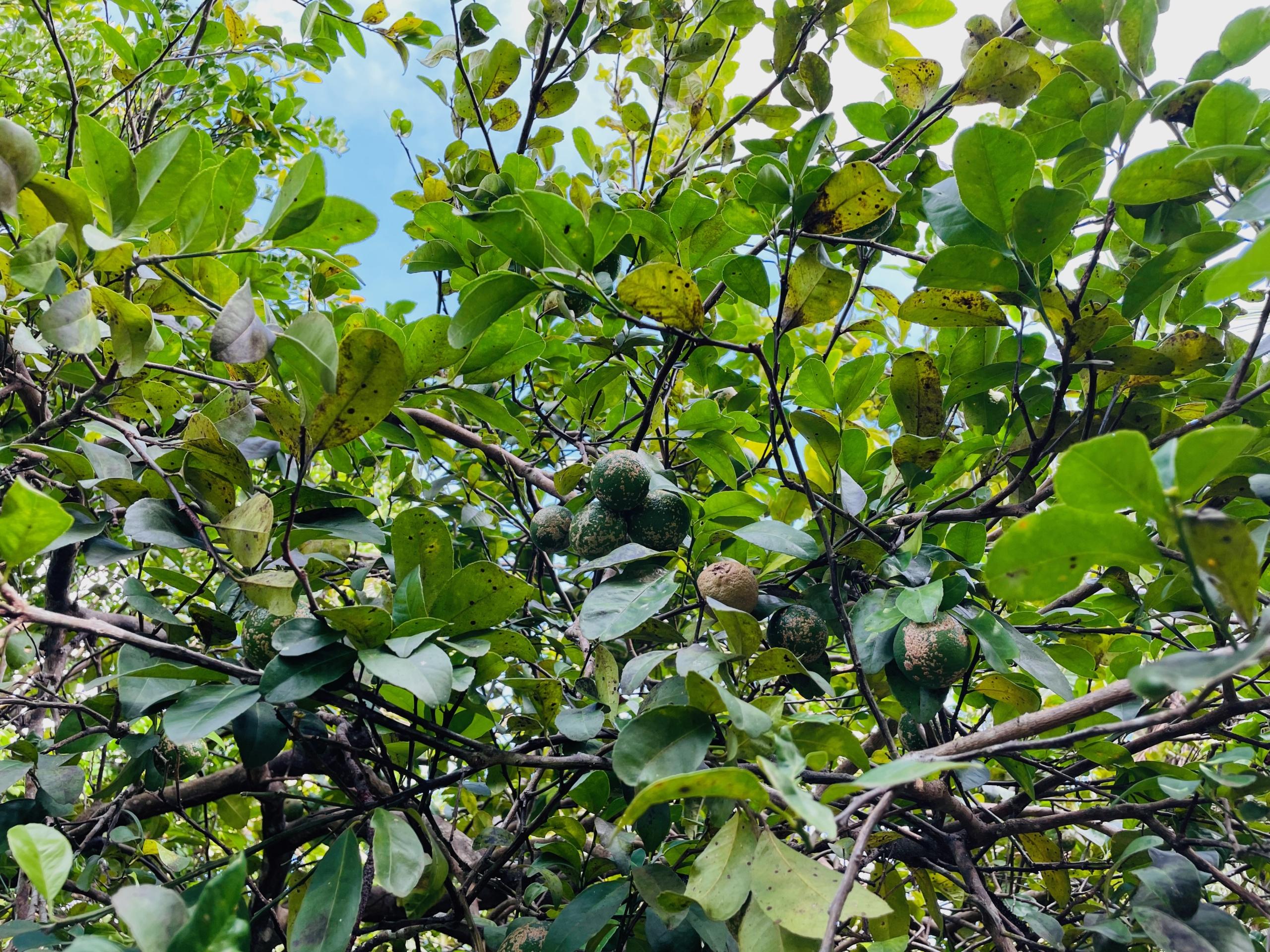 boca-barranca-grounds-mandarine