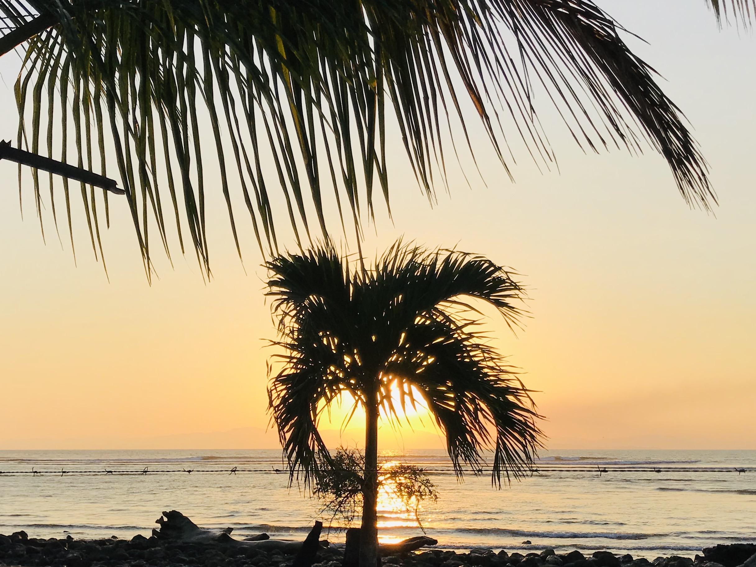 boca-barranca-palm-sunset